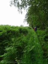 2 A typical overgrown path