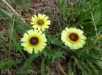 31 Yet more yellow flowers