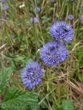 32 Purple flowers