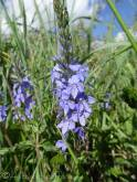 6 Unidentified flower