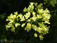 11 Nicely lit lemony-yellow flower