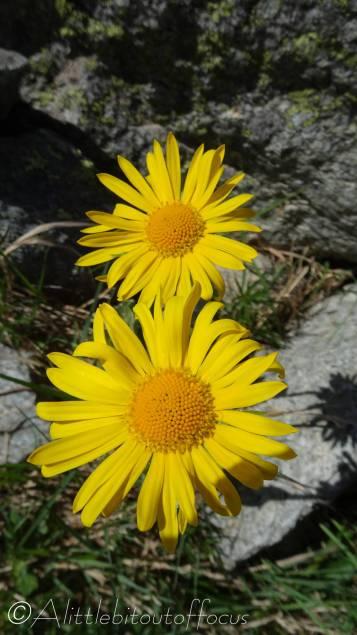 14 Yellow flowers