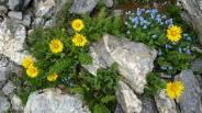 15 Natural Rock Garden