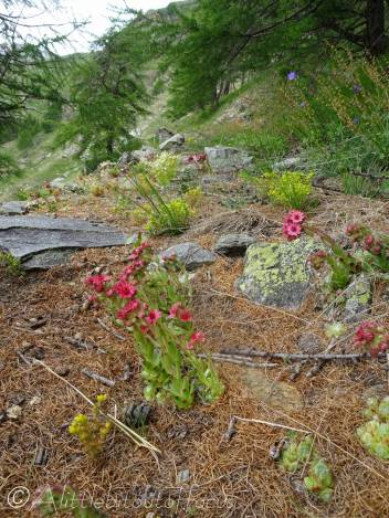 26 Natural rock garden