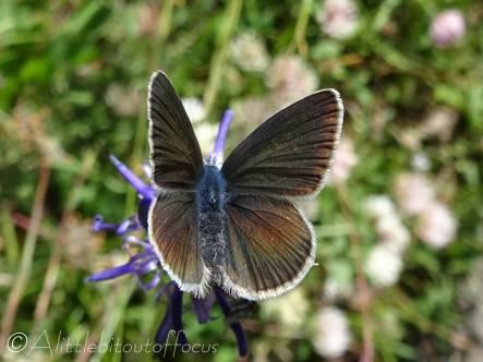 3 Unidentified butterfly