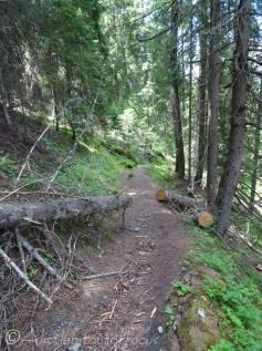 32 Fallen tree