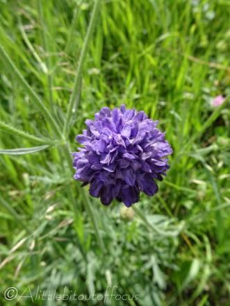33 Unknown flower