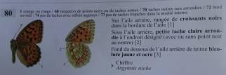 6 Niobe Fritillary identification