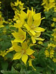 2 Unknown yellow flower