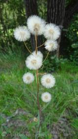 20 Unidentified fluffy plant
