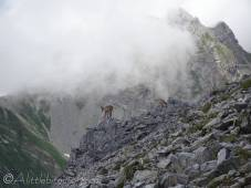 29 Another bouquetin (ibex)