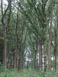 4 Tree cathedral