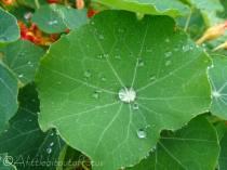 6 Droplets
