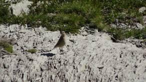 15 Unidentified bird