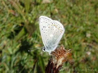 16 Unidentified butterfly