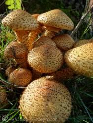 11 Fungi
