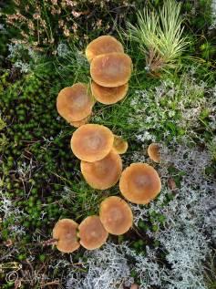B6 Fungi