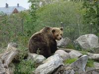 B9 Bear