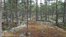 C6 Woodland path