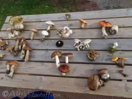 C9 Mushroom display