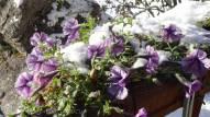 6 Frosty flowers