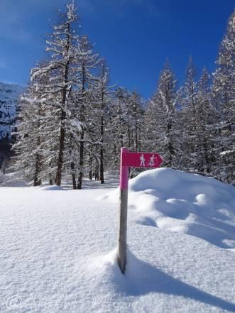 12 Signpost