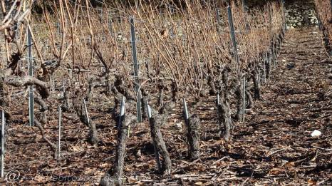 27 Vines