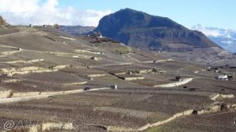 13 Vineyards and Bietschorn (r)