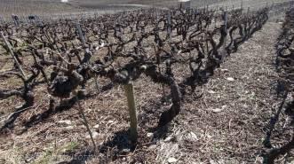 15 Vines