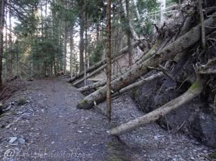 16 Fallen trees