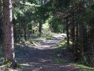 37 Forest track
