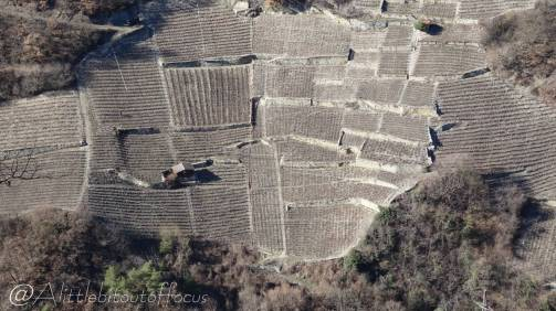 45 Vineyards below