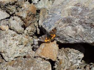 10 Orange Underwing moth