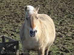 16 Pony